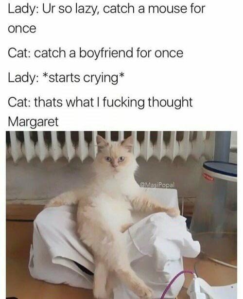 Catswag - meme