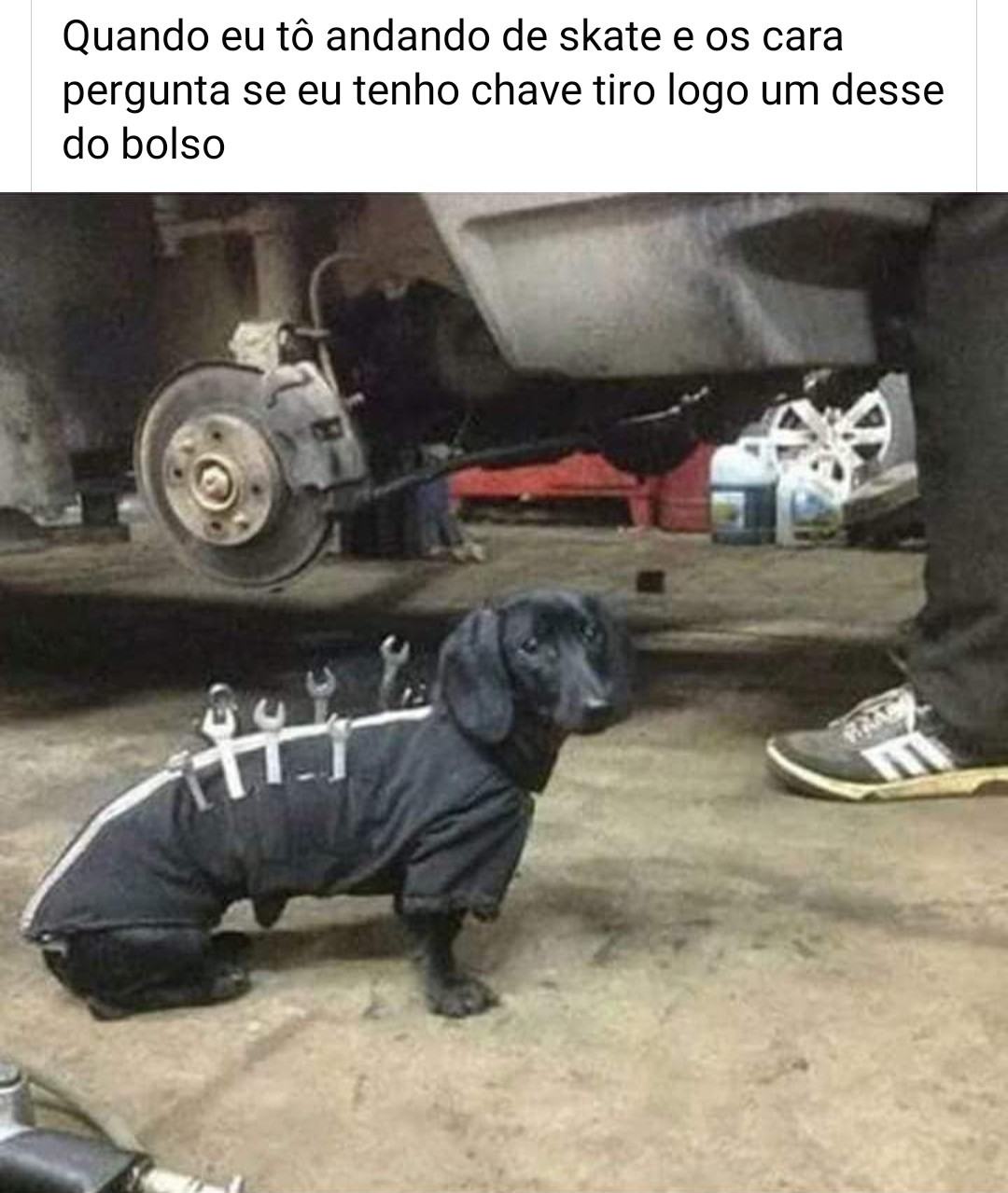 Cachorro preto - meme