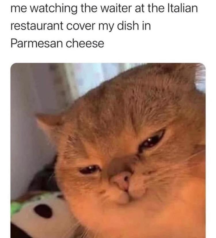 the fresh cheese - meme