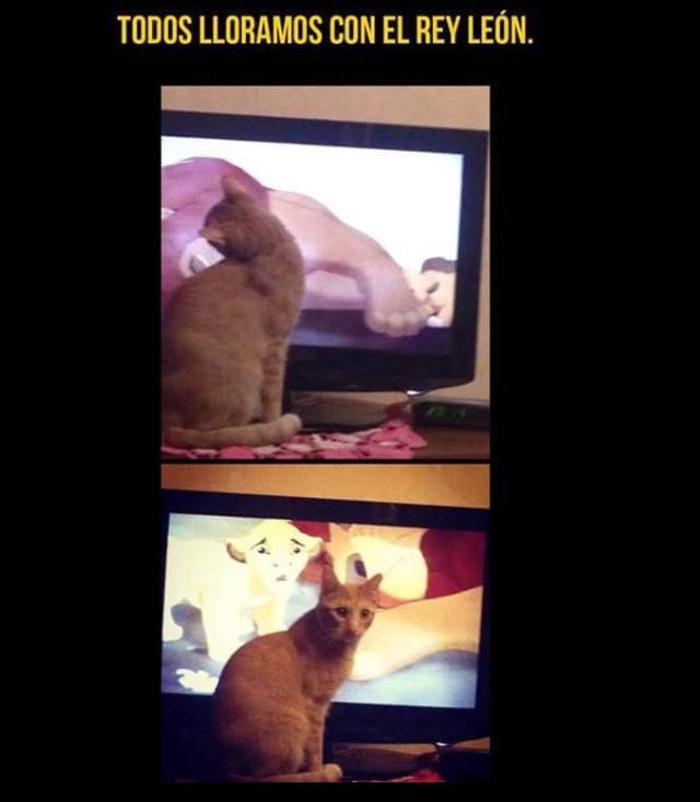 """Hasta los gatitos lloran :""""""""( - meme"""