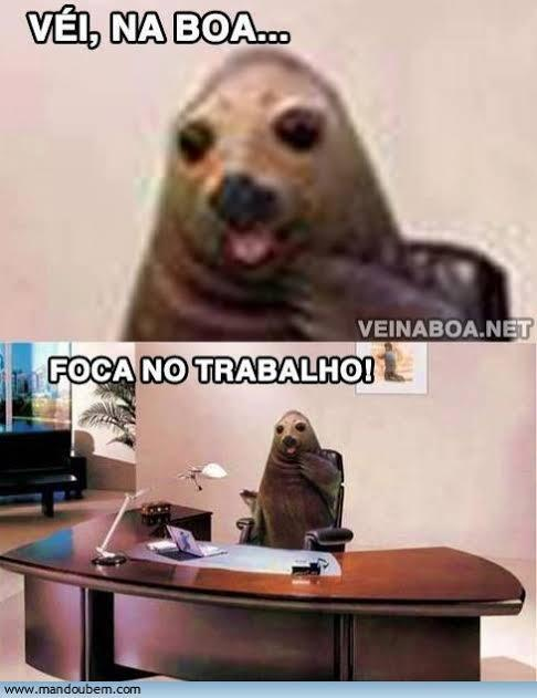 foca no trampo tiw kkkk - meme