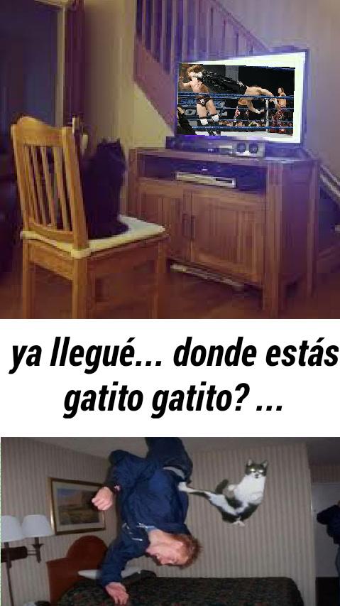 Este gato ya se Descontrolooo xdxdxd - meme