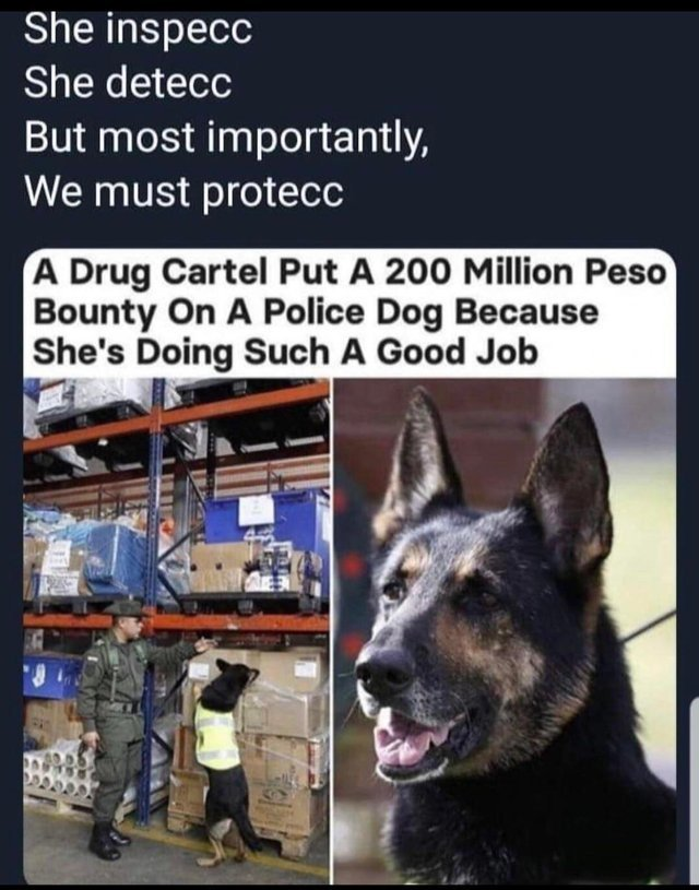 A drug cartel put a 200 million Peso bounty on a police dog because she's doing such a good job - meme