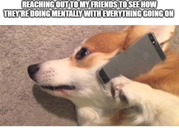 How are y'all doing through this tough time? Doggo does a check-in - meme