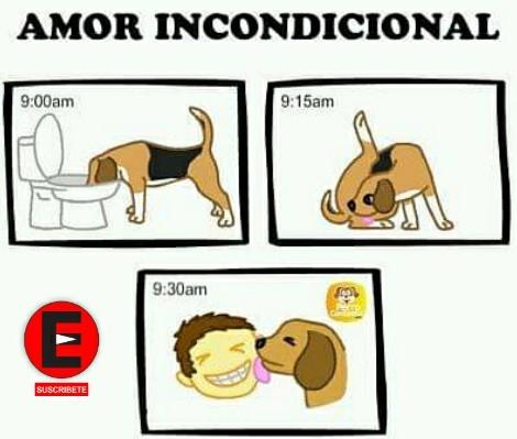 Like si tienes perro - meme