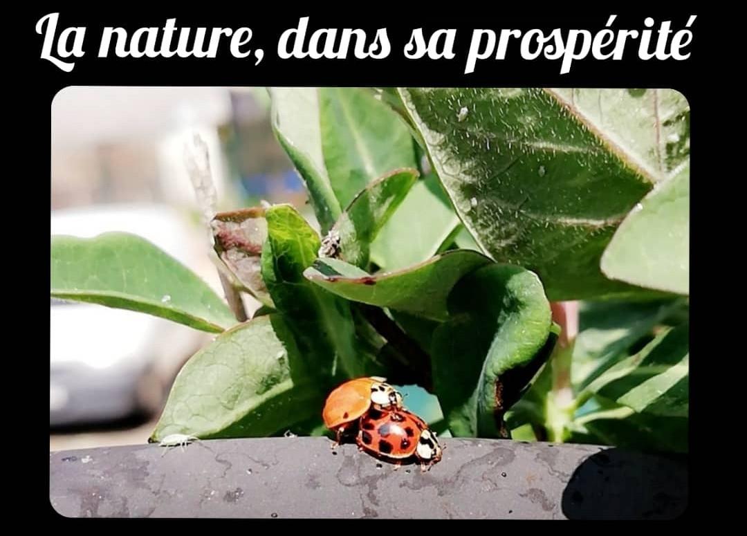 Entomologie et coucheries - meme