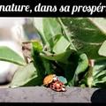 Entomologie et coucheries