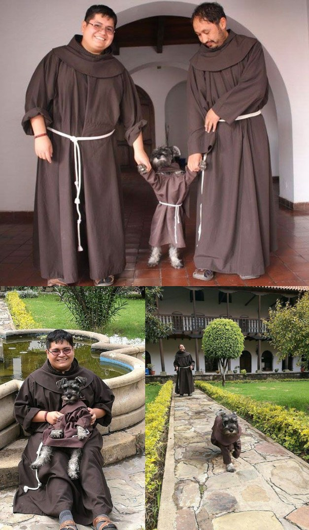 monks adopted a stray dog and made him into a holy dog. - meme