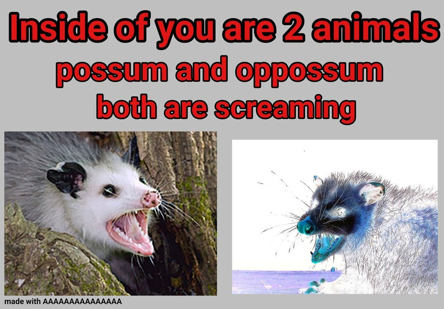 Possum and opoosum are the same exact thing before anyone asks - meme