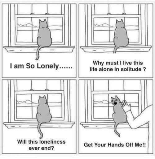 sarcasm cat is lonely but hates you - meme