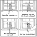 sarcasm cat is lonely but hates you