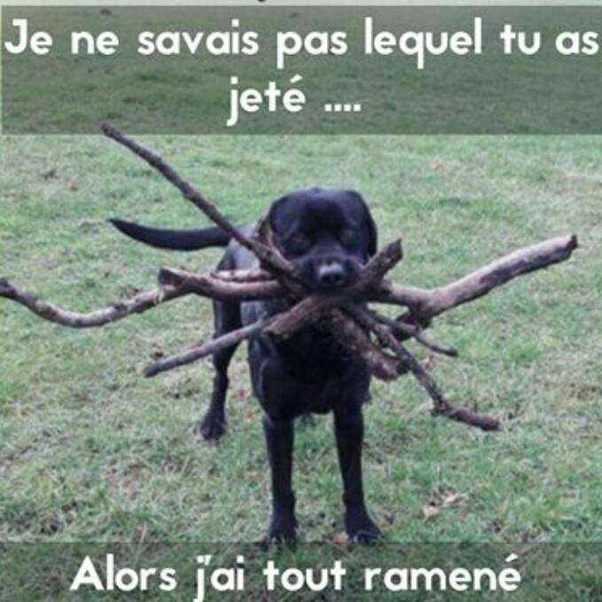 #cerveaudechien - meme