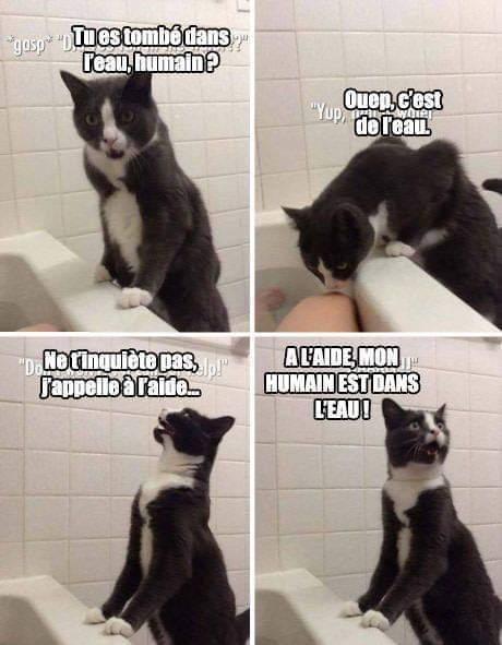 C'est pas drôle mais j'aime les chat - meme