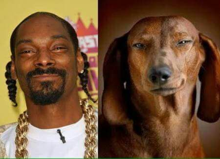 "Snoop ""dog"" - meme"