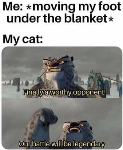 A ll the time - meme