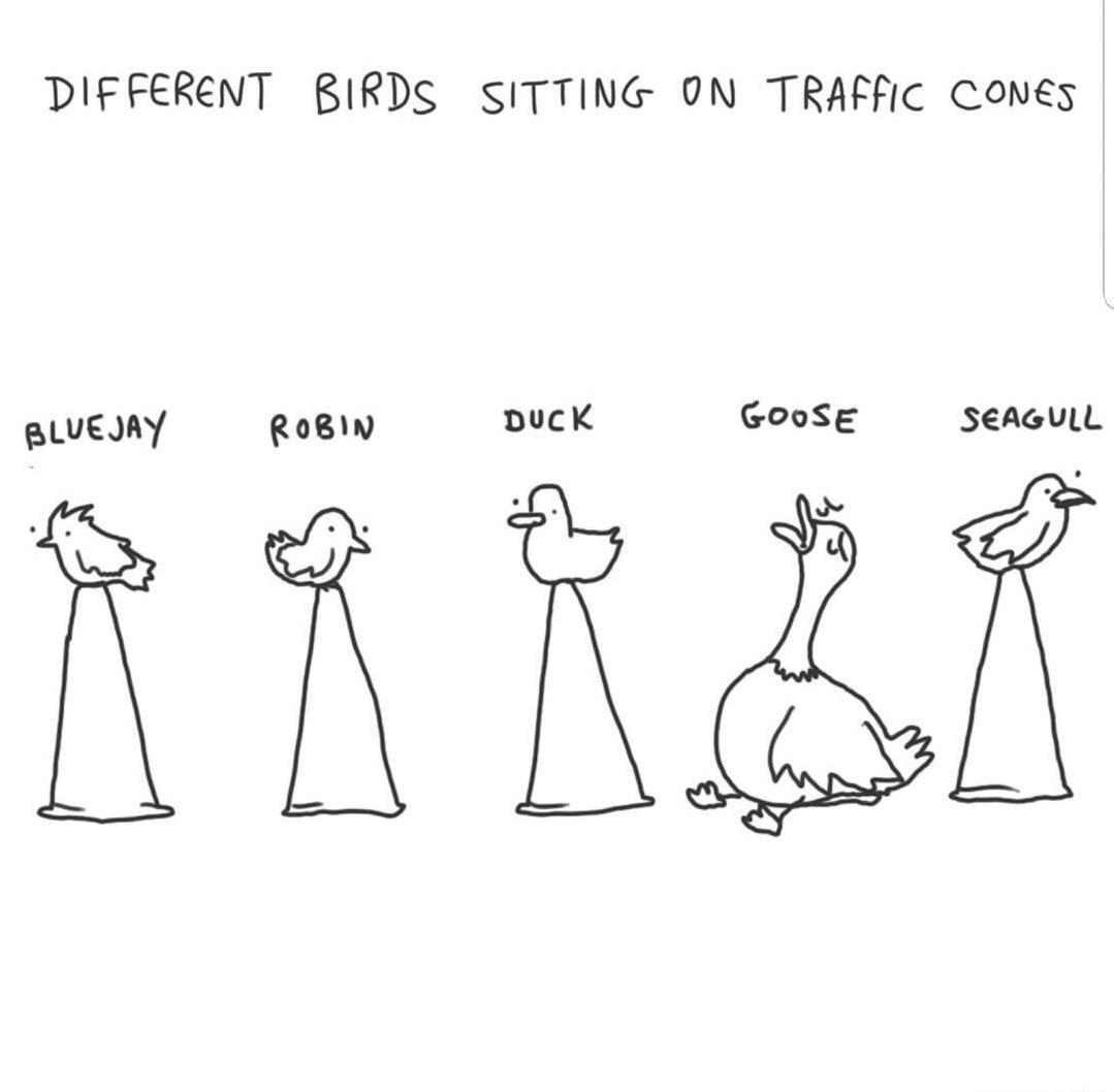 Ummm... poor goose - meme
