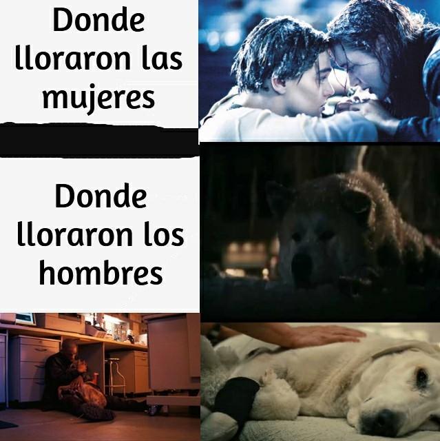 No nos merecemos a los perros - meme