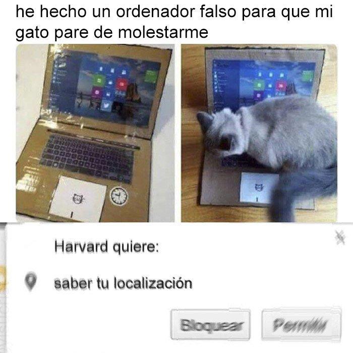 Gatos > Perros - meme
