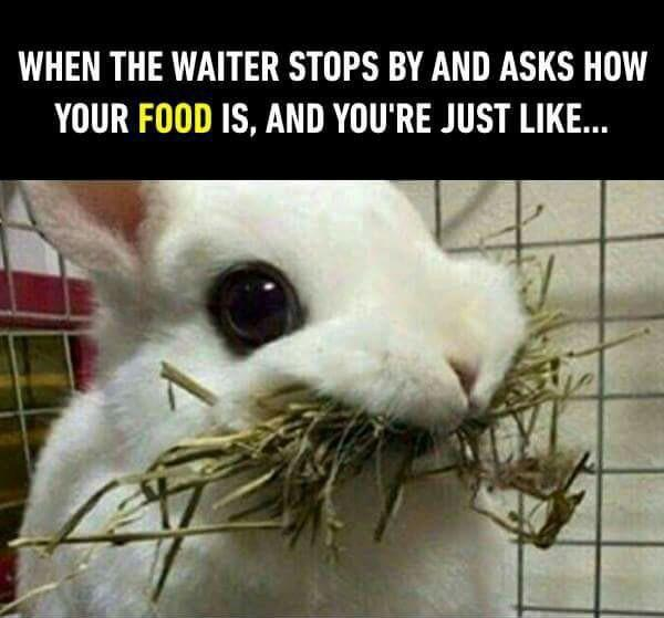 When the waiter stops by and asks how your food is and you're just like - meme