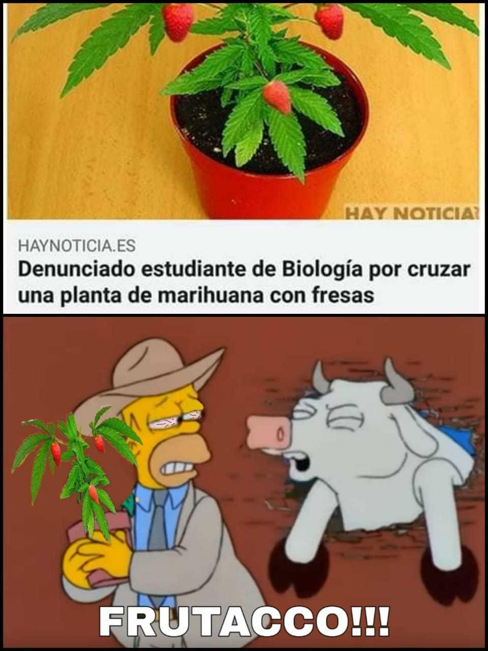 Esto solo pasa en Latinoamérica - meme