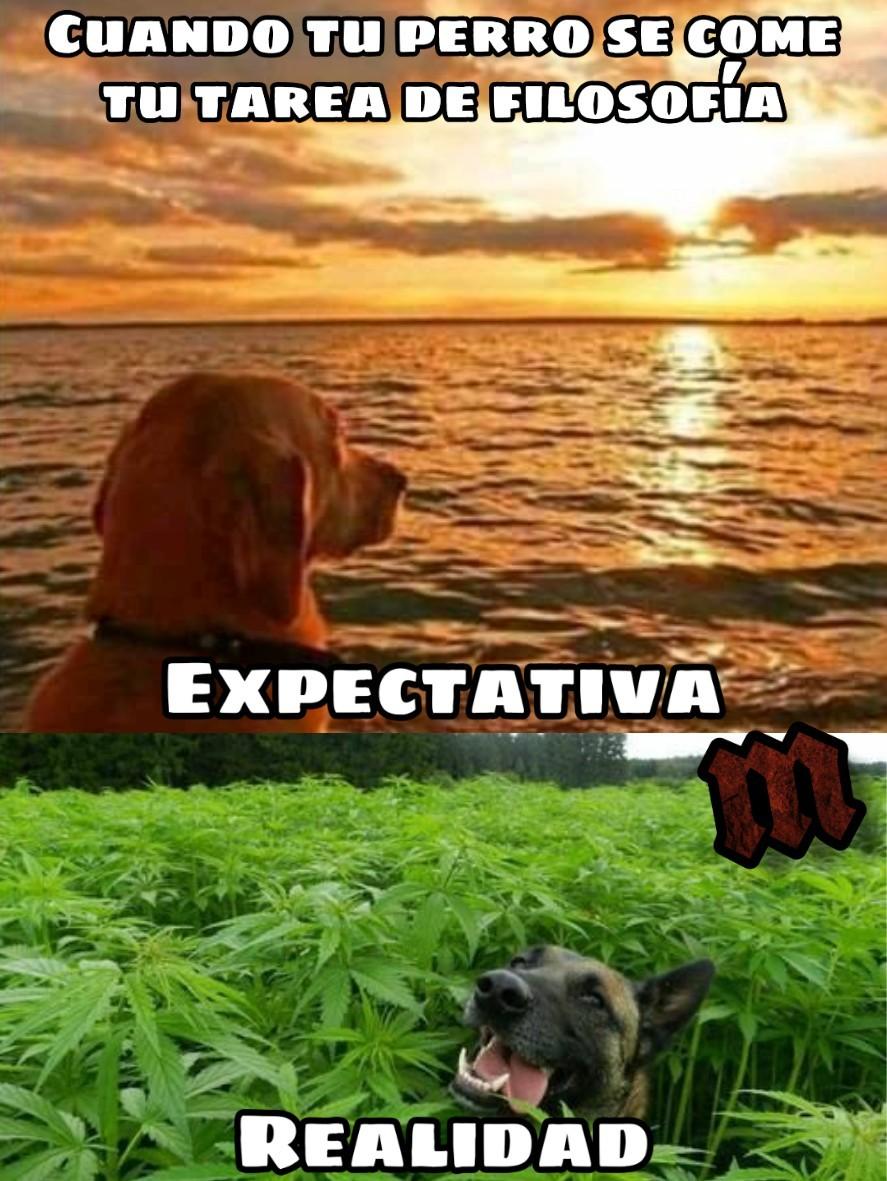 Fuma marihuana - meme