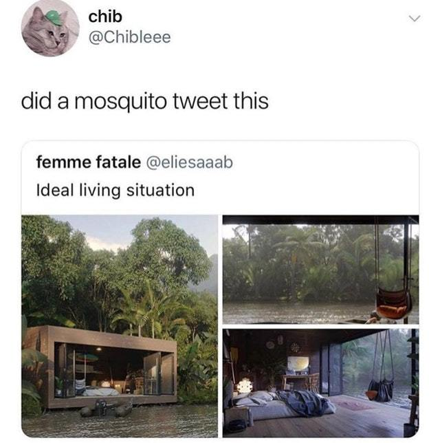 Ideal place for a mosquito - meme