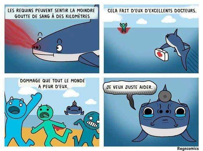 Pauvre requin - meme
