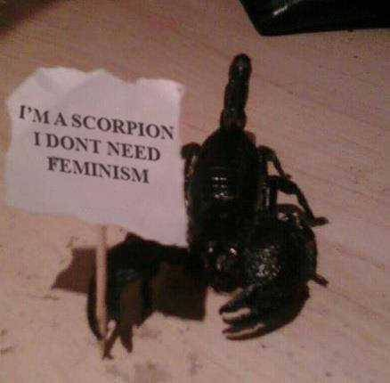 Silly Scorpions - meme