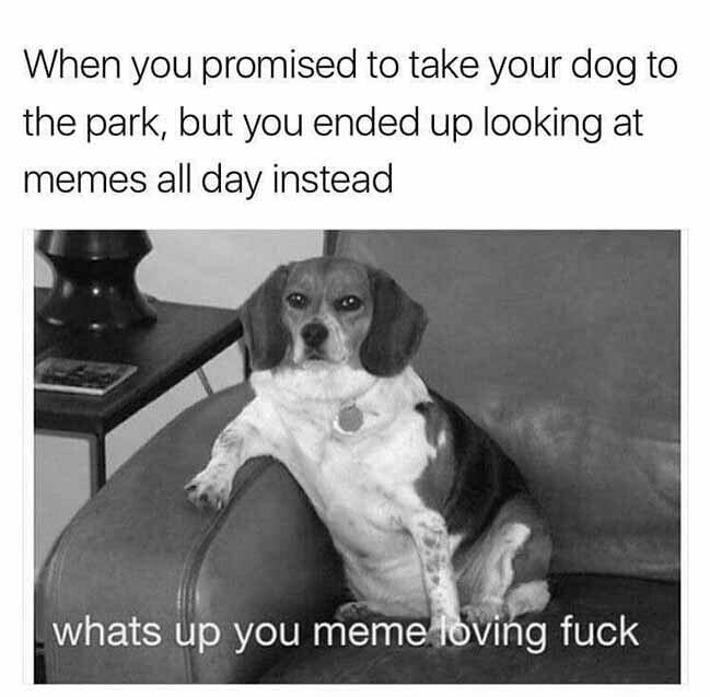 Pupper does an A N G E R Y - meme