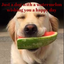 Doggo with a watermelon - meme