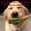 Doggo with a watermelon