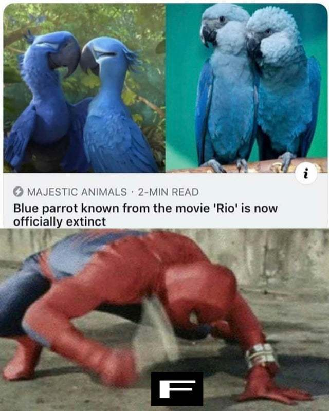Blue parrot known from the movie Rio is now officially extinct - meme