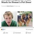 step dog