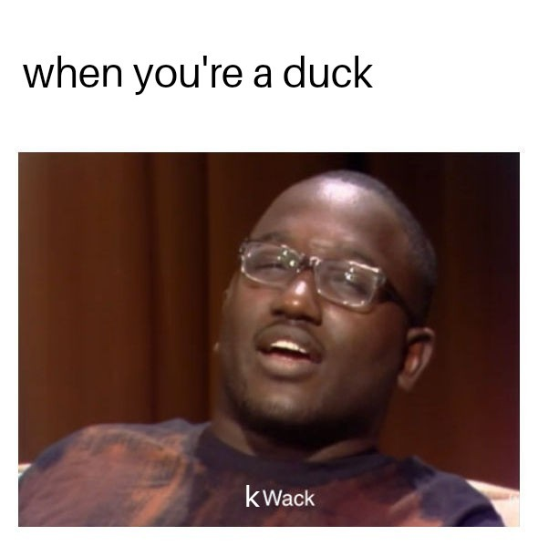 show a duck some love, gimme dat bread - meme