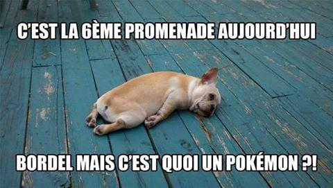 Pokemon GOOO - meme