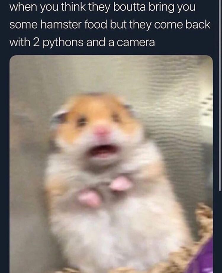 Show peta - meme
