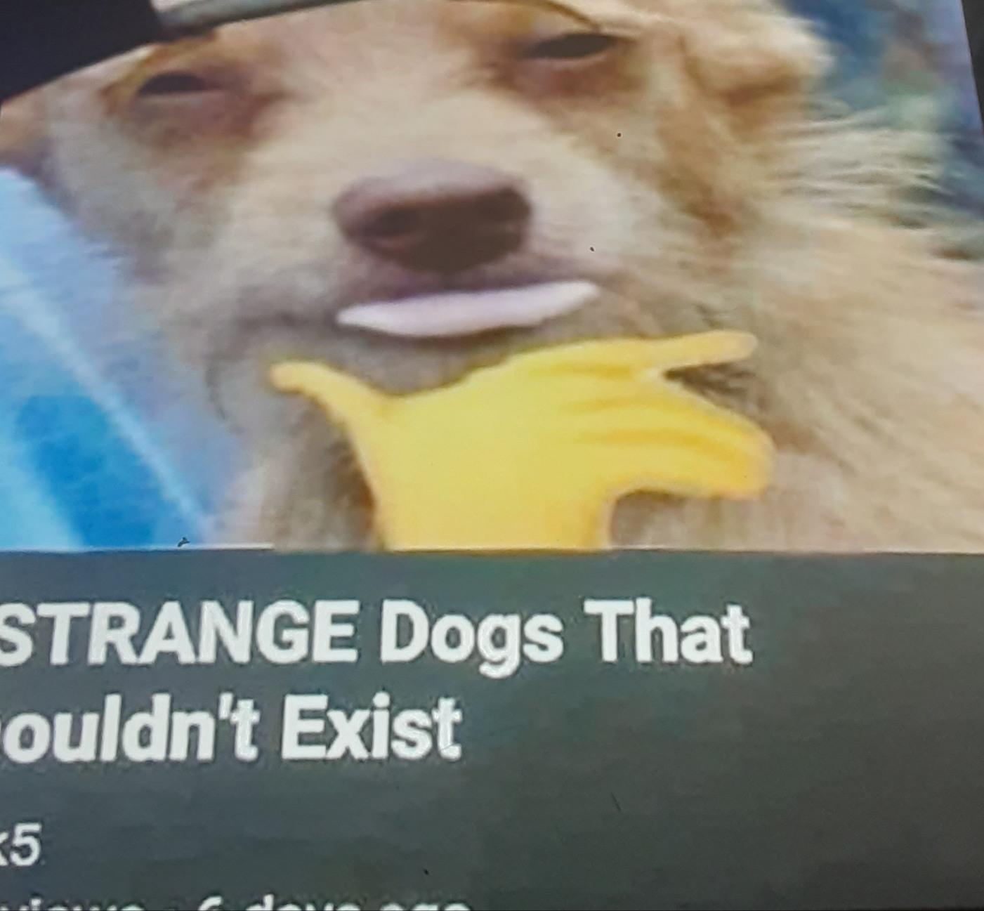 Top 5 perros que no deberían de existir - meme