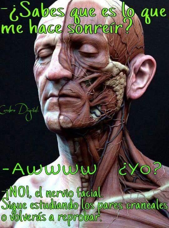 DALE ASI NO LA PONES - meme