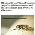 Malditas moscas