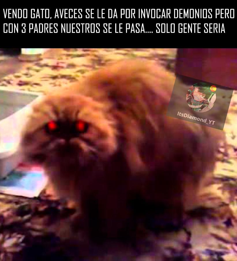 Gato demonio - meme