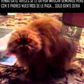 Gato demonio