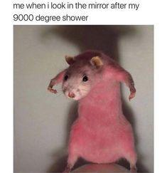 9000 degrees - meme