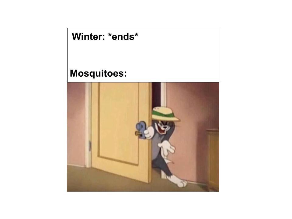 nisg - meme