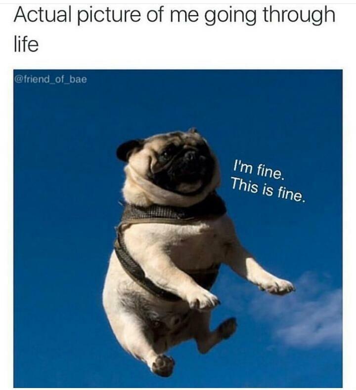 Love puggies - meme