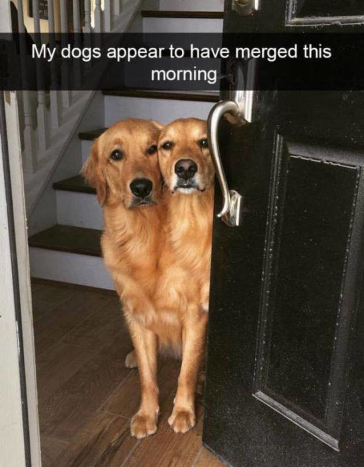 11/10 good boys - meme