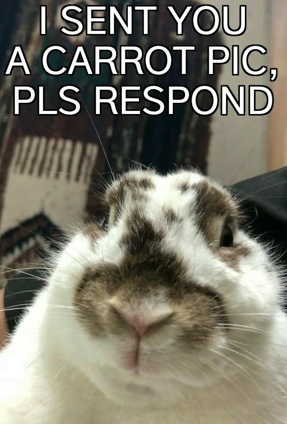 Silly rabbit, tricks go for  - meme
