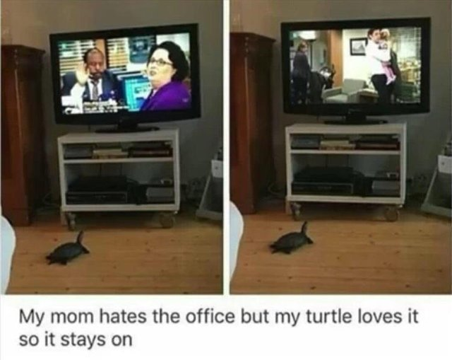 My mom hates the office but my turtle loves it - meme