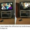 My mom hates the office but my turtle loves it