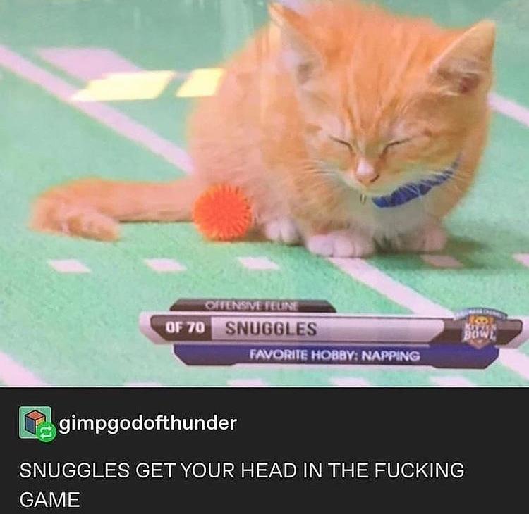 damn it snuggles - meme