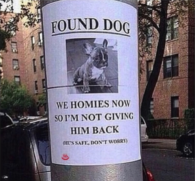 Found Dog - meme